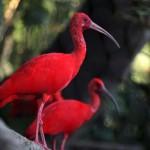Karibische Naturphänomene in Trinidad & Tobago