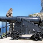 Gibraltar – wo die wilden Affen leben