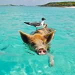 Zeig's dem Winterwetter: Ab auf die Bahamas!