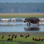 Unterwegs an der Elephant Coast in Südafrika
