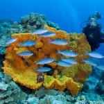 Papua Neuguinea – das faszinierende Taucherparadies am anderen Ende der Welt