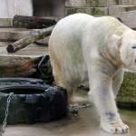Zoo Karlsruhe – nur eine Rüssellänge vom Zentrum