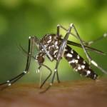 Malediven sind frei vom Zika-Virus