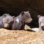 Auf Safari in Grafenau–Wildtieren in unberührter Natur begegnen