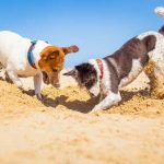 Unvergessliche Urlaubstage mit dem Hund