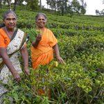 Fünfgute Gründe, Sri Lanka zu besuchen