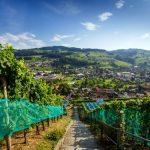 Genusskultur zwischen Bodensee und Rheintal
