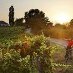 Herbst-Tipp: Neue Weinland Steiermark Radtour