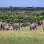 Kenia senkt die Gebühren für die Nationalparks