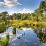 Nordpfade– wandern auf die norddeutsche Art