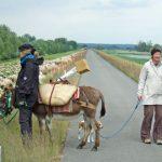 Nationalpark Unteres Odertal: Weite Ausblicke, stille Momente