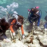 Gärtner für das Korallenriff vor den Florida Keys