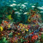 42 künstliche Riffe begeistern Tauchfreunde
