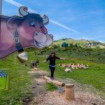 Zauchensee: KUHles Bergabenteuer für die Familie