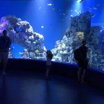 Neues Cairns Aquarium zeigt Riff und Regenwald