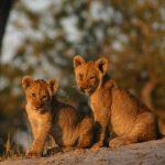 Botswana – Naturphänomene zwischen Kalahari Wüste und Okavangodelta