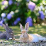 Okunoshima – Japans Paradies für Kaninchen