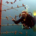 Erste Korallen-Zuchtstation am Great Barrier Reef