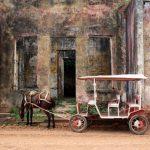 Heimat der Fluss-Pferde an Amazonas + Orinoko