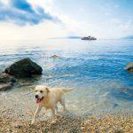 Ferien auf vier Pfoten in der Kvarner-Bucht