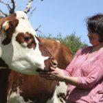 Neue Käse-Route führt durch die Normandie