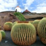 Die schönsten Dörfer auf Lanzarote: Fischerhäfen, märchenhafte Täler und kanarisches Markttreiben