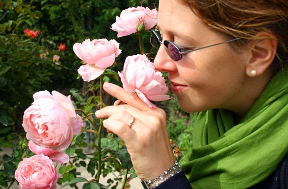 Im Rosengarten von Alnwick findet sich sogar eine eigene, nach der Stadt benannte Rosenzüchtung. (Foto Karsten-Thilo Raab)
