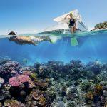 Great Barrier Reef: Korallen erholen sich wieder