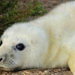 England ganz tierisch: Die Heuler von Norfolk
