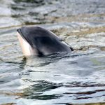 Wilhelmshaven: Wale beobachten am Strand