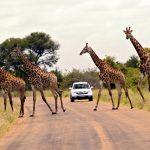 Der Krüger-Nationalpark: Nachhaltig und grenzüberschreitend in die Zukunft