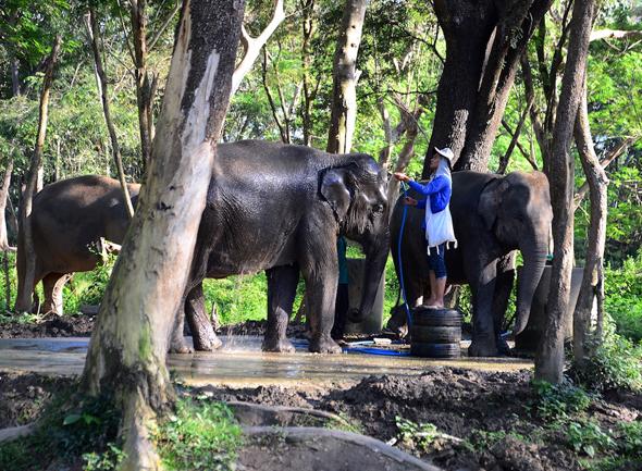 Geduldig warten die Elefanten auf eine wohltuende Dusche. - Foto Cornelia Lohs