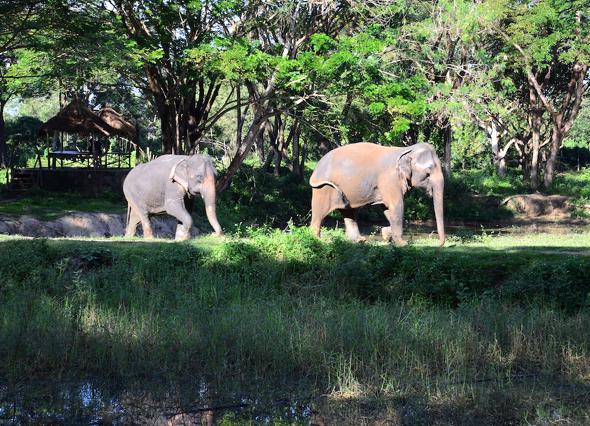 Obschon die riesigen Säugetiere als gutmütig gelten, sollte stets ein Sicherheitsabstand gewahrt werden. - Foto Cornelia Loha