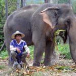 Elephant Valley – das etwas andere Stück Thailand