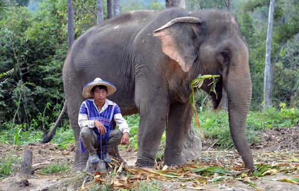 Im Elephant Valley im Norden von Thailand wird sich liebevoll um das Wohl der Dickhäuter gekümmert. - Foto Cornelia Lohs