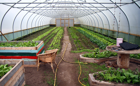 Eine Schlüsselfunktion für die Versorgung im Dorf nimmt der Anbau von Obst und Gemüse für den Eigenbedarf ein. - Foto Karsten-Thilo Raab