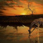 Malawi kämpft für den Erhalt seiner Artenvielfalt