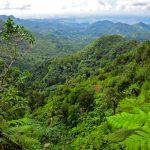 Grenada: Regenwald-Trekking auf der Gewürzinsel