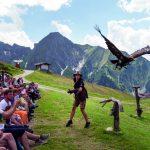 Adlerbühne Ahorn – höchstgelegene Greifvogelstation Europas