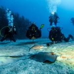 Rhode Island: Eintauchen in die Unterwasserwelt