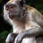 Malaysia – Trenddestination für Naturfreunde