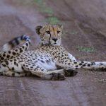 Nationalpark-Safari in Südafrika auf eigene Faust