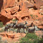 Wild und frei – Natur erleben in Nevada