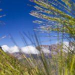 Kanaren: Subtropischer Schnee + Vulkan-Weine