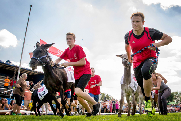 Eselrennen