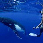 Schwimmen mit dem Buckelwal in Westaustralien