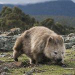 Australien – Inseln voller tierischer Begegnungen