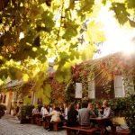 Wien und der Wein: Heurige, Weinwanderungen und der berühmte Gemischte Satz