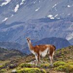 Chile – vom Regenwald nach Patagonien