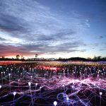 Installation von Bruce Munro bezaubern Australien